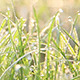 Wet Grass (3-Pack) - VideoHive Item for Sale