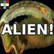Alien Anomaly