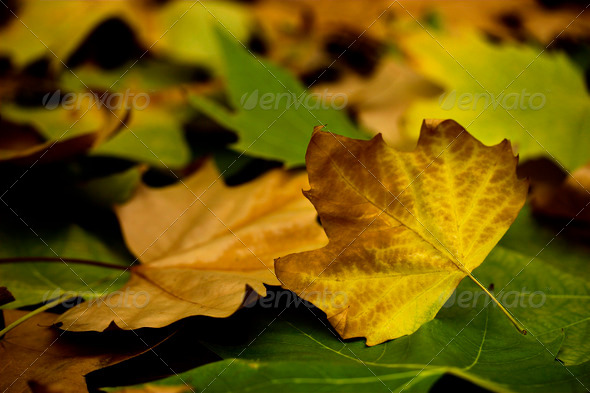 Fall leaves - Stock Photo - Images