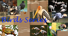 Bird Series Collection