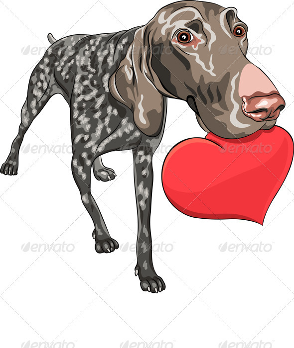 Vector Dog Kurzhaar Breed Holding a Red Heart - Animals Characters