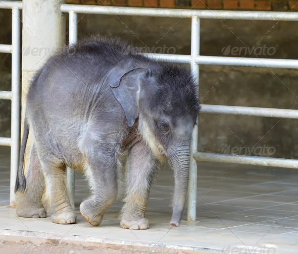 Baby elephants - Stock Photo - Images