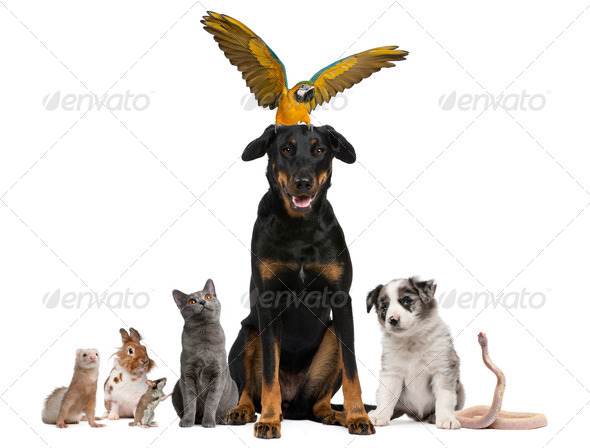 Portrait of group of pets in front of white background - Stock Photo - Images
