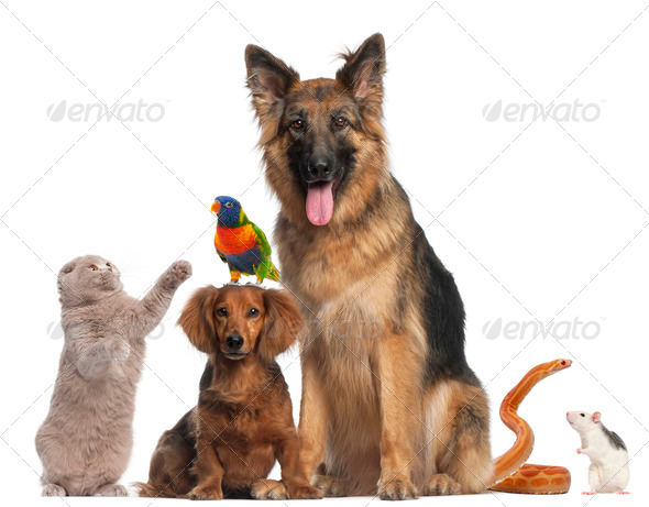 Group of animals in front of white background - Stock Photo - Images