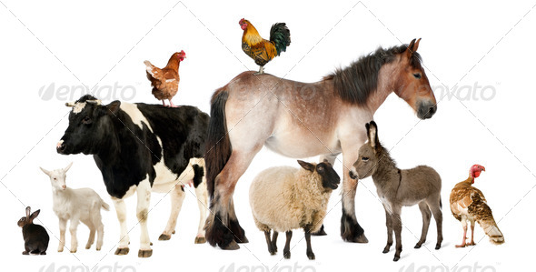 Variety of farm animals in front of white background - Stock Photo - Images