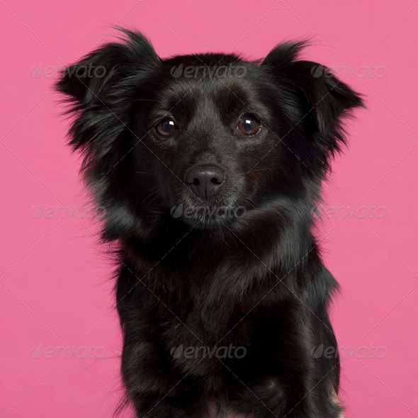 Mixed-breed dog - Stock Photo - Images