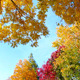 Autumn Trees 1 - VideoHive Item for Sale