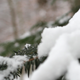 Pine Tree With Snow 01 - VideoHive Item for Sale