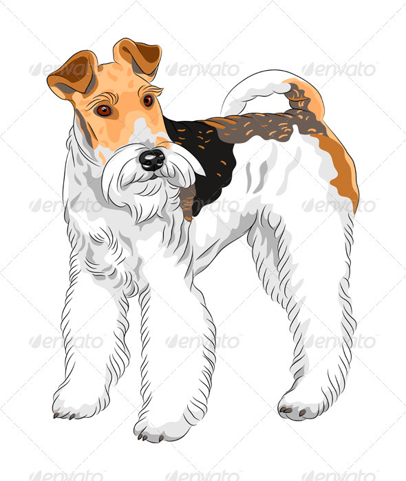 Vector Sketch Dog Wire Fox Terrier Breed - Animals Characters