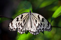 Paper Kite Butterfly - PhotoDune Item for Sale