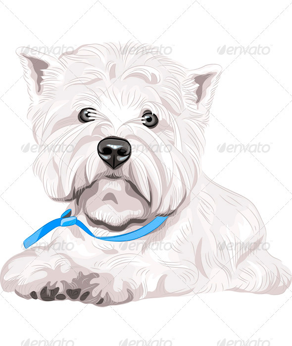 Vector Dog West Highland White Terrier Breed - Animals Characters