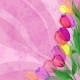 Flowers Tulips on Pink Background - GraphicRiver Item for Sale