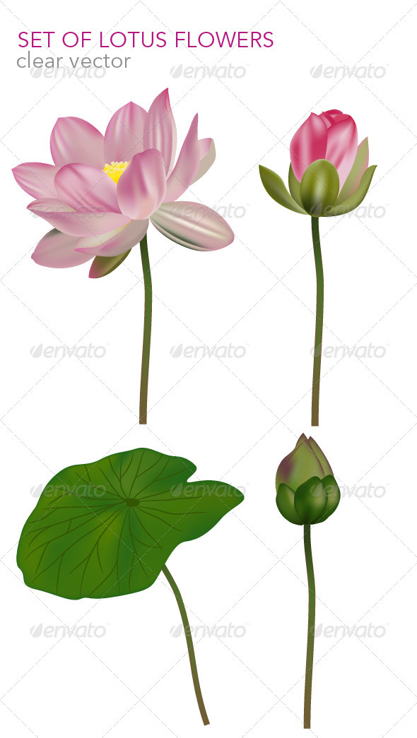 Set of lotus flowers ( vector base ) - Flourishes / Swirls Decorative
