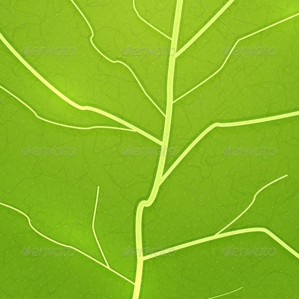 Vector Fresh Green Leaf Texture - Flowers & Plants Nature