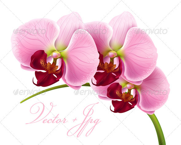 Orchid flower - 100% vector + jpg - Flowers & Plants Nature