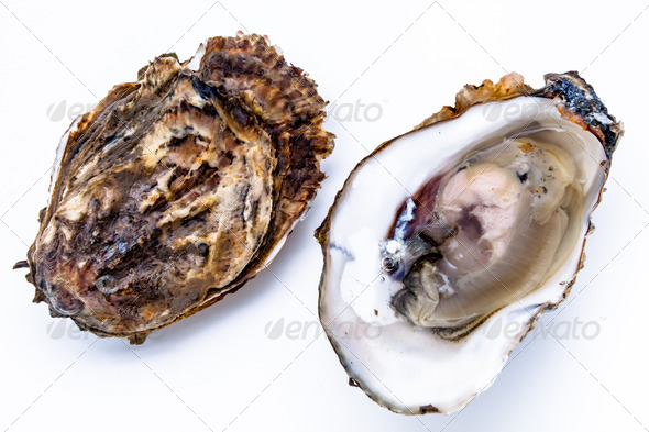 Two oysters - Stock Photo - Images