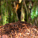 Ants and Anthill - VideoHive Item for Sale
