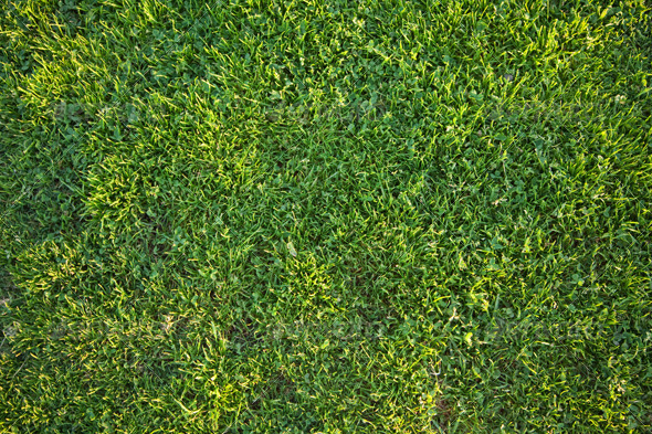 Green Grass - Nature Textures