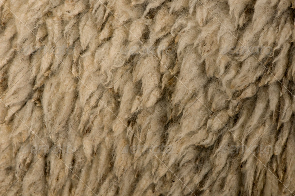 Close-up of Arles Merino Sheep Wool - Nature Textures