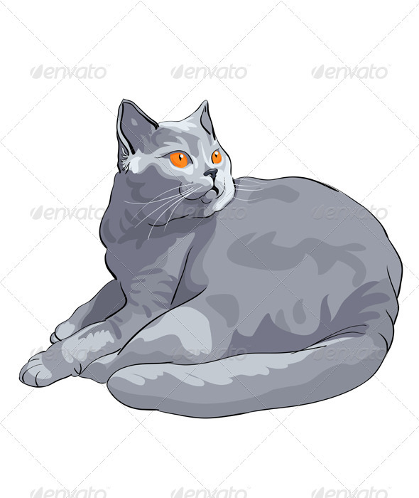 British shorthair blue cat lies and looks - Animals Characters