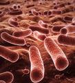Bacteria - PhotoDune Item for Sale