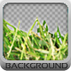 In Grass Background - GraphicRiver Item for Sale