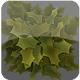 Fallen palmate leaves Billboard pack - 3DOcean Item for Sale