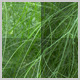 Green Fennel Plant Textures - GraphicRiver Item for Sale