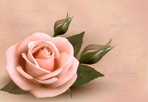 Retro Background with Pink Rose with Bud - Flowers & Plants Nature