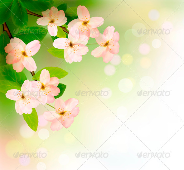 Spring Background with Blossoming Tree Brunch - Seasons Nature
