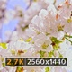 Spring Blossom (2.7K) - VideoHive Item for Sale