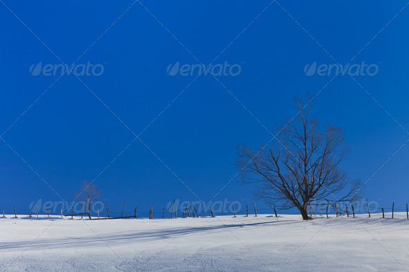 tree in winter  - Stock Photo - Images