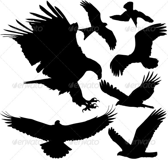 Birds of Prey Vector Silhouettes - Animals Characters