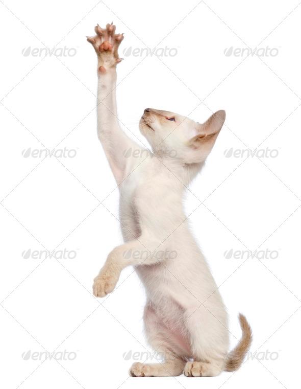 feliway cat spray 60ml