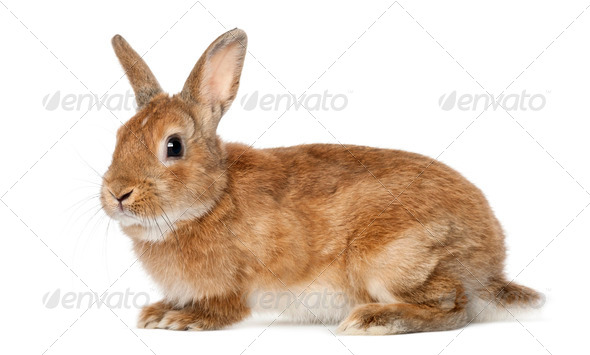 Rabbit lying against white background - Stock Photo - Images