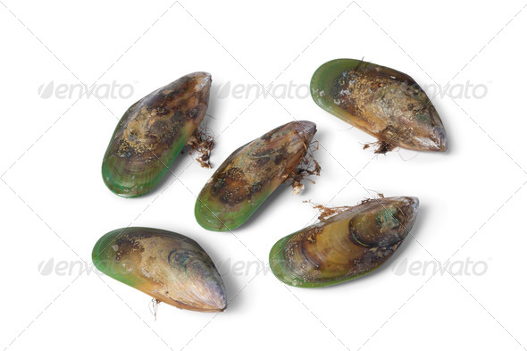 New Zealand green lipped mussels - Stock Photo - Images