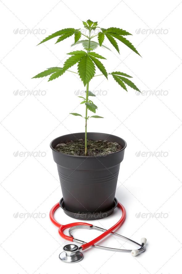 Medical Marijuana - Stock Photo - Images