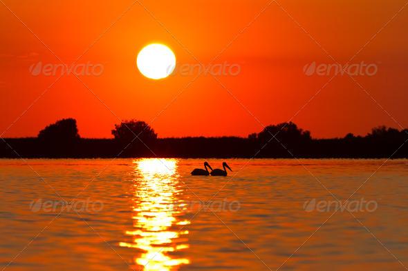 sunrise in the Danube Delta - Stock Photo - Images