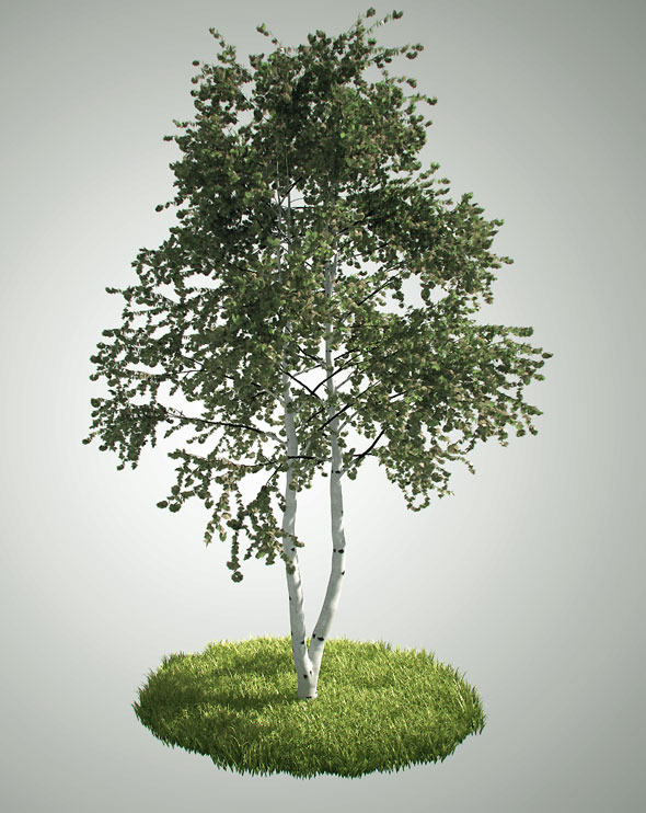 Tree betula pendula - 3DOcean Item for Sale