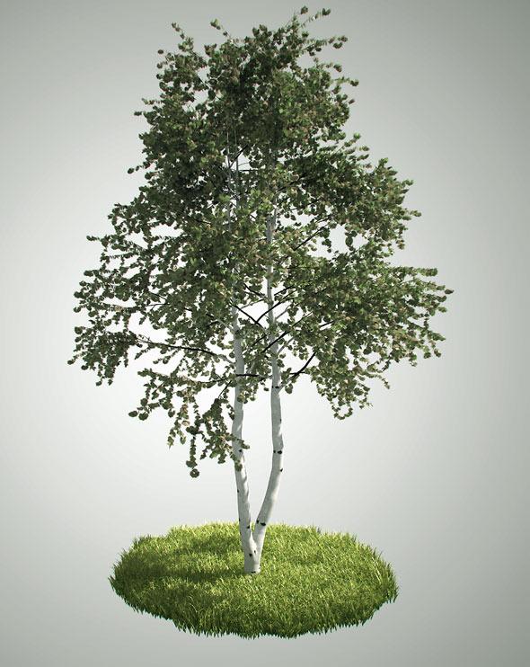 Tree Betula Pendula By Miralemkruho 3docean