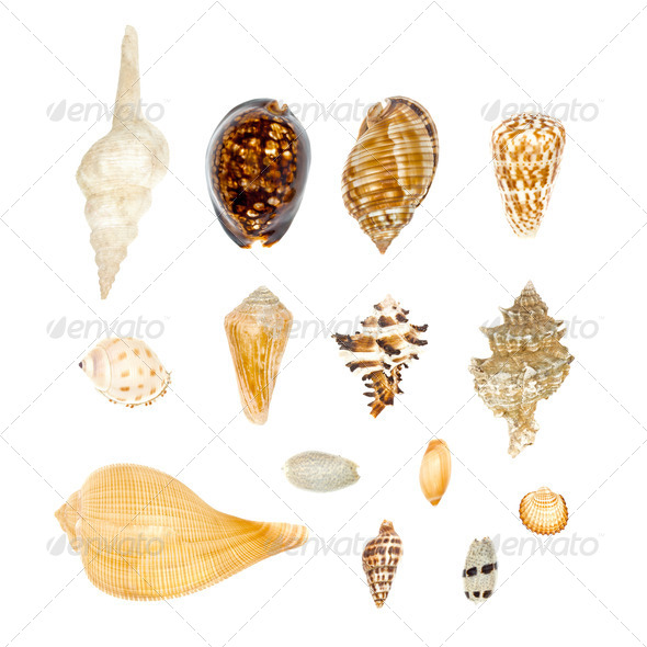 Sea Shell Collection Set isolated on white background - Stock Photo - Images