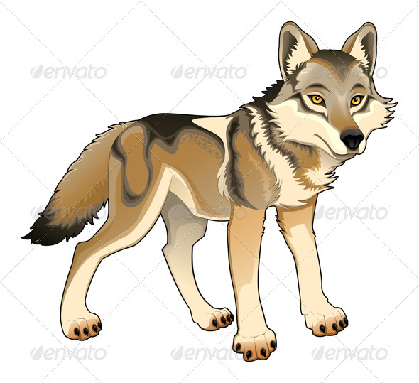 Wolf - Vector Isolated Character - Animals Characters