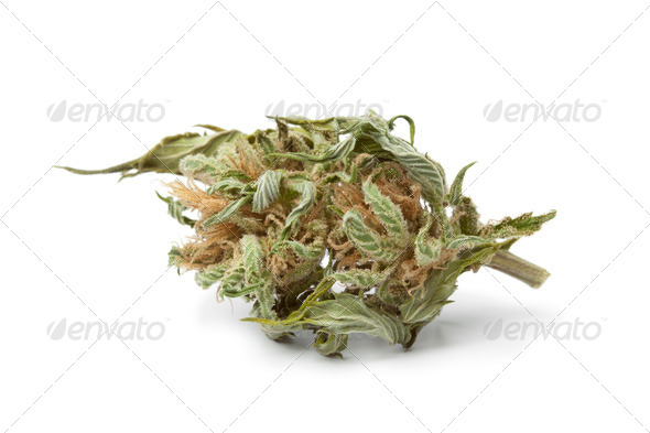 Dried marijuana bud with visible THC - Stock Photo - Images
