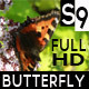 Download Footage Gathering Pollen Butterly from VideHive