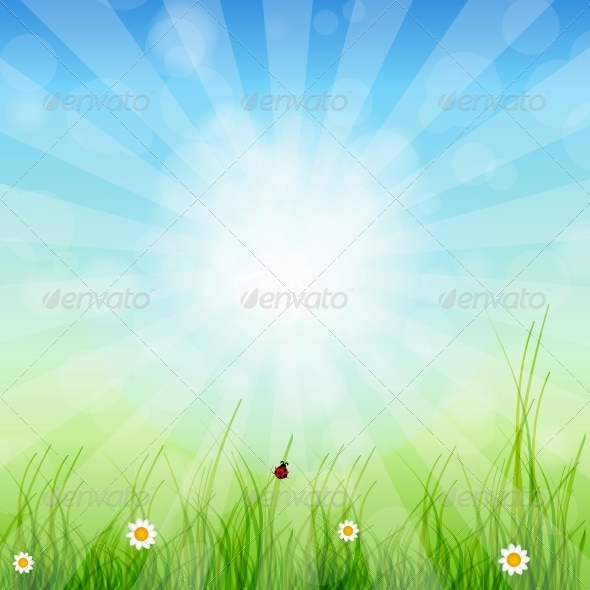 Spring Green Background. Grass and Sun - Miscellaneous Conceptual