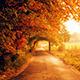 Autumn's Walk - AudioJungle Item for Sale