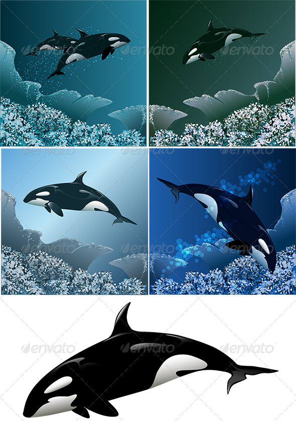 Killer Whale Set - Animals Characters