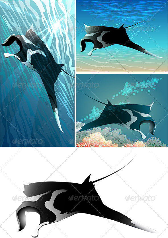 Manta Ray Set - Animals Characters