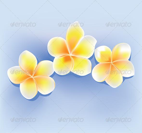 Jepun Flower - Flowers & Plants Nature