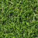 Seamless Tileable Grass Texture - 3DOcean Item for Sale